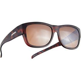 Alpina Overview II P Okulary rowerowe, czarny/brązowy